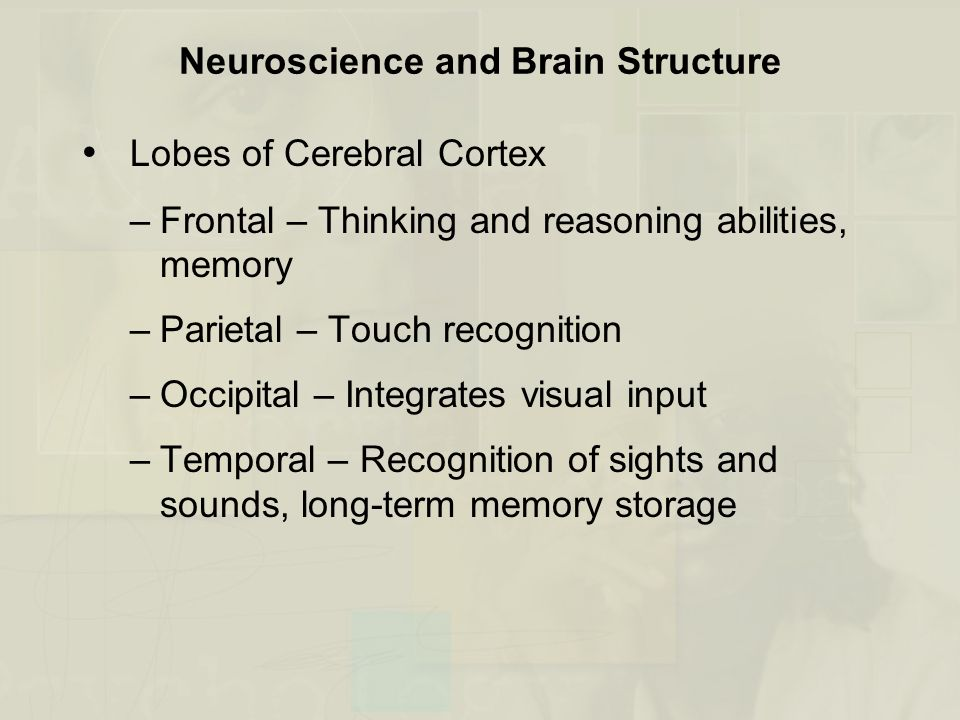 Neuroscience and Brain Structure