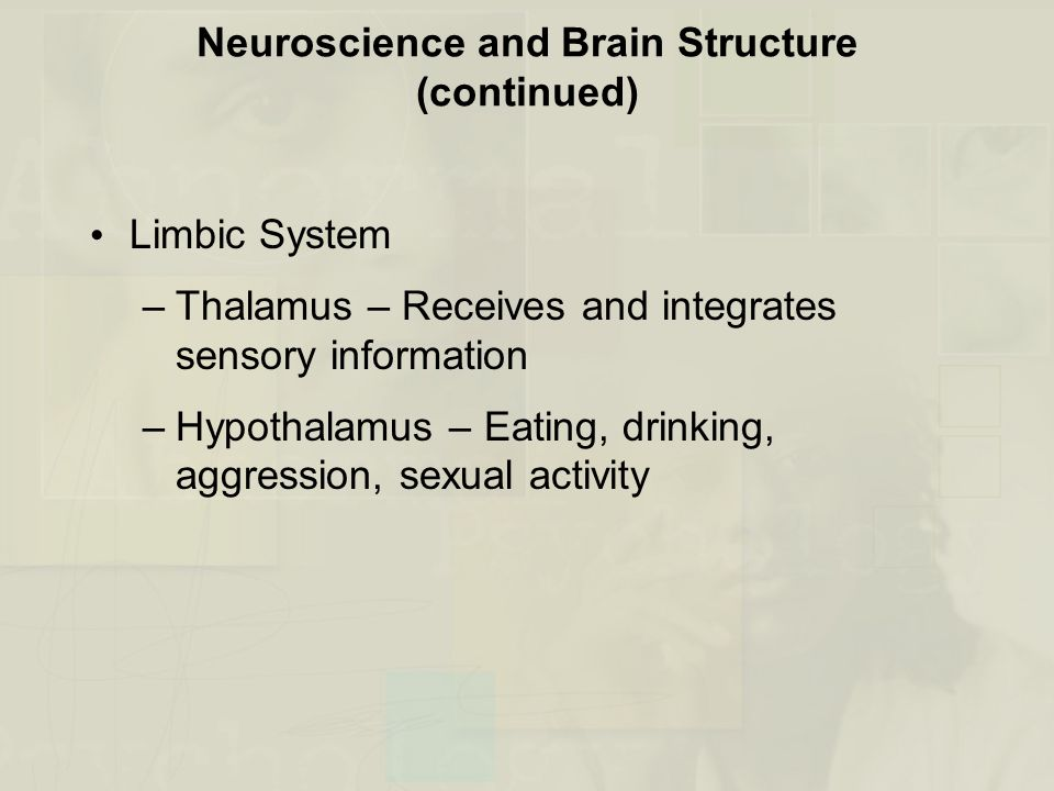 Neuroscience and Brain Structure (continued)