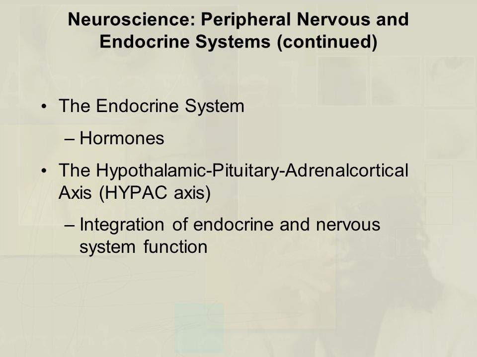Neuroscience: Peripheral Nervous and Endocrine Systems (continued)