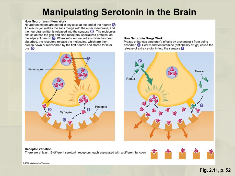 Manipulating Serotonin in the Brain