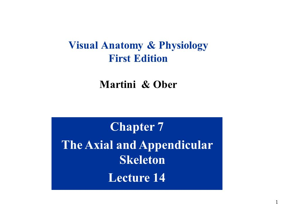 Chapter 7 The Axial And Appendicular Skeleton Lecture 14