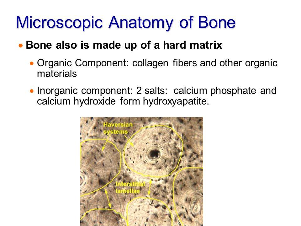 Inorganic Phosphate The Skeletal System. -...