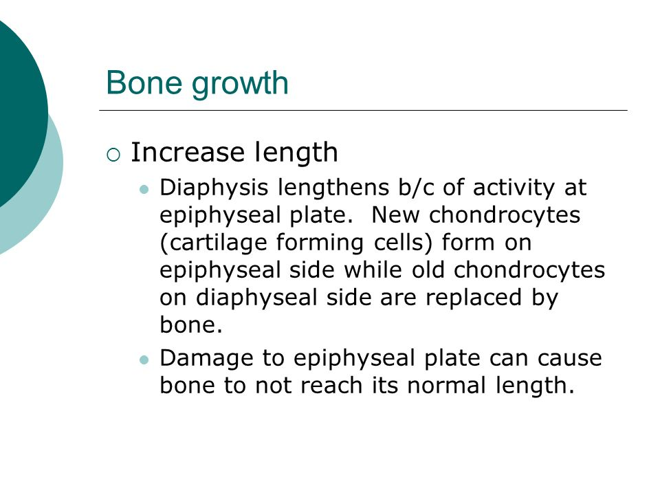 how to grow bones in length