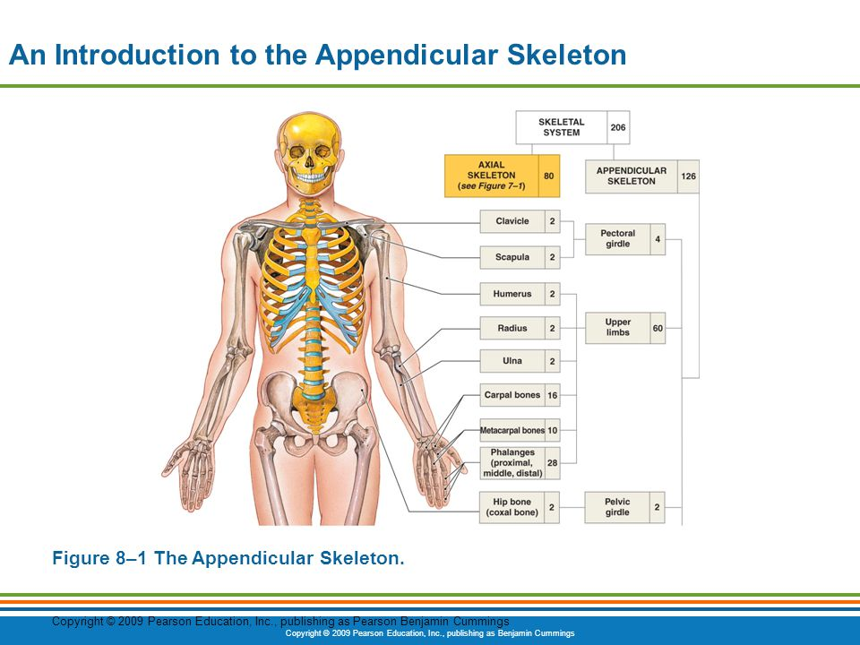 introduction to the skeleton An introduction to skeletal system - the bones and what they do citing  research references when you research information you must cite the  reference.