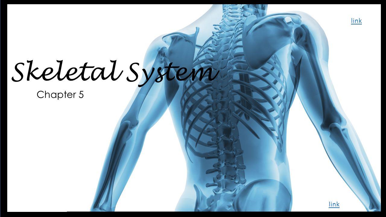 Skeletal System link Chapter 5 link. - ppt video online download