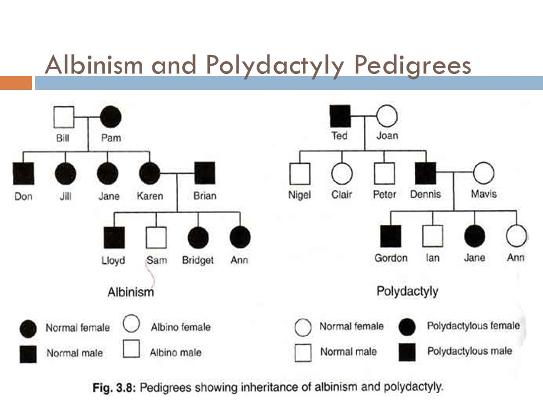 Dominant And Recessive Alleles Chart Chapter 11, Complex Ge...