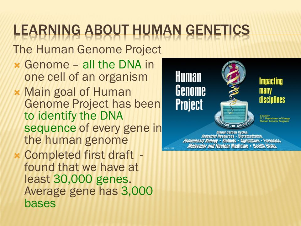 Learning About Human Genetics