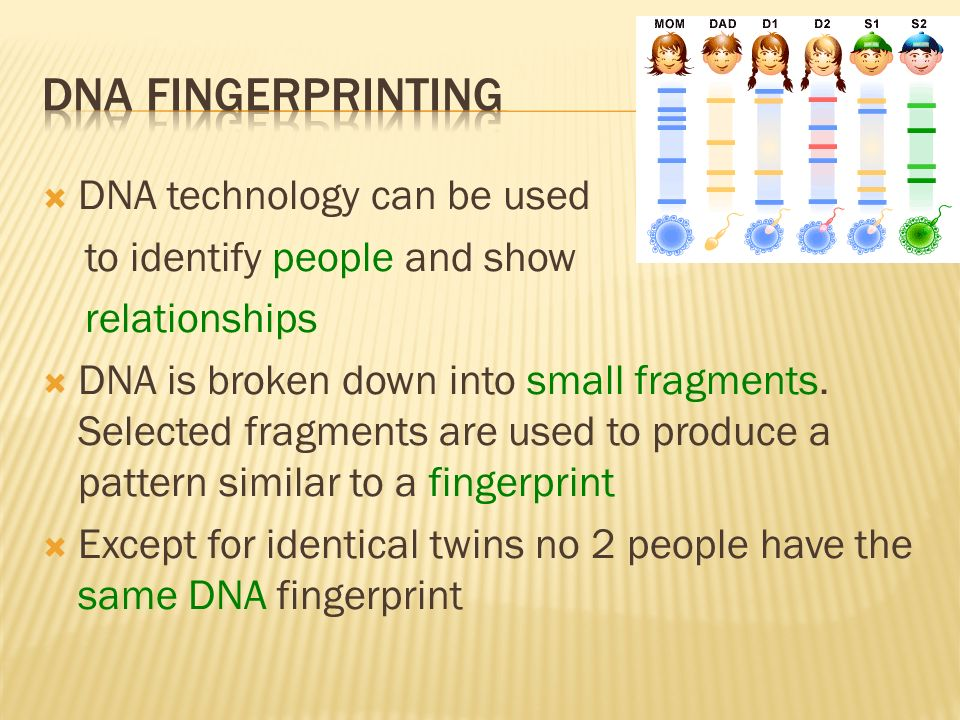 DNA Fingerprinting DNA technology can be used