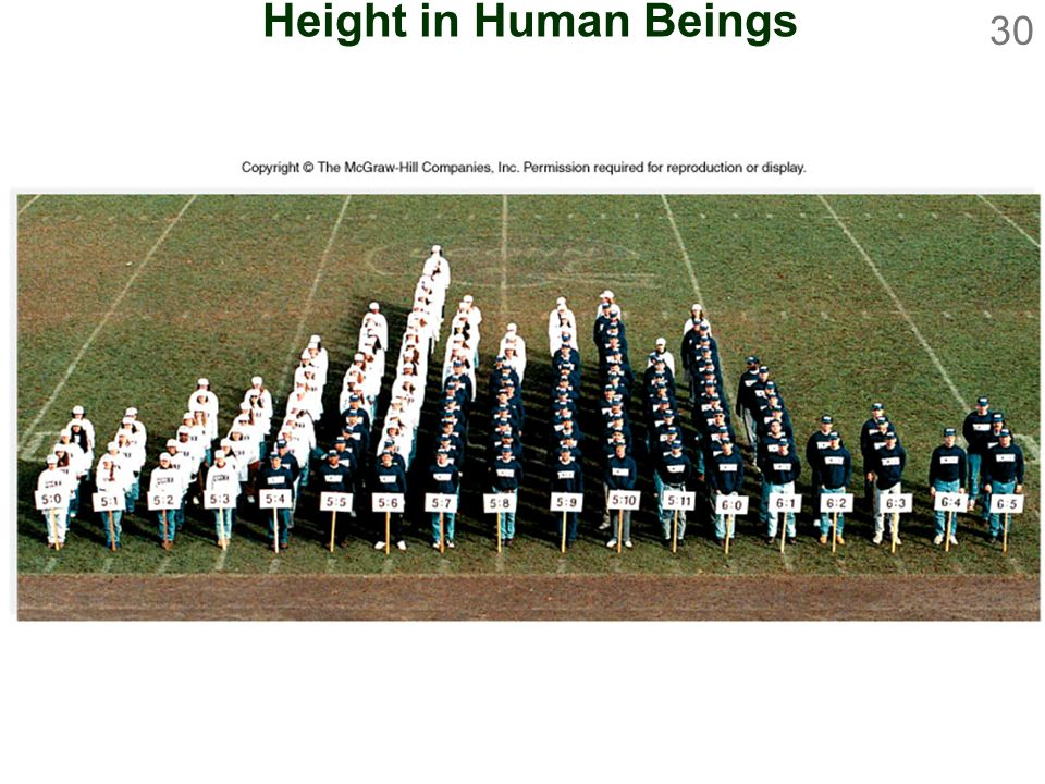Height in Human Beings