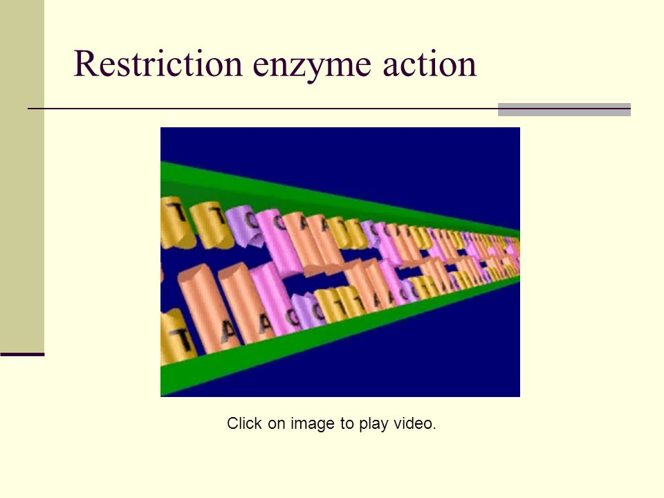 Restriction enzyme action