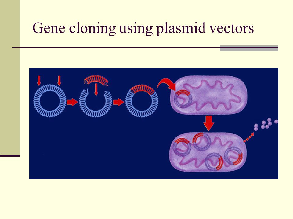 Gene cloning using plasmid vectors