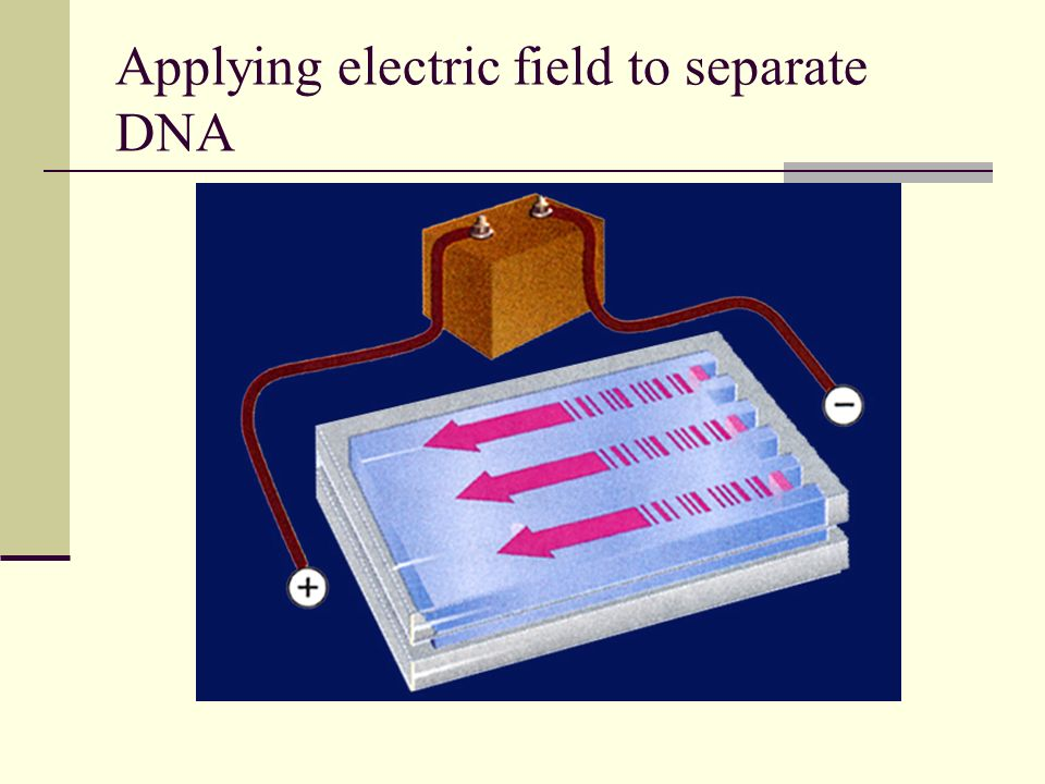 Applying electric field to separate DNA
