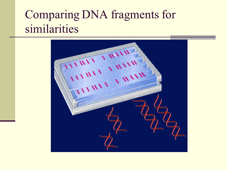 Comparing DNA fragments for similarities