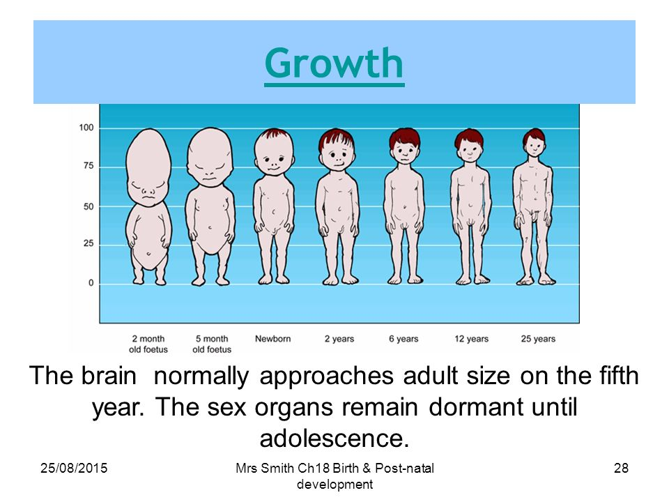 18 above adult development growth