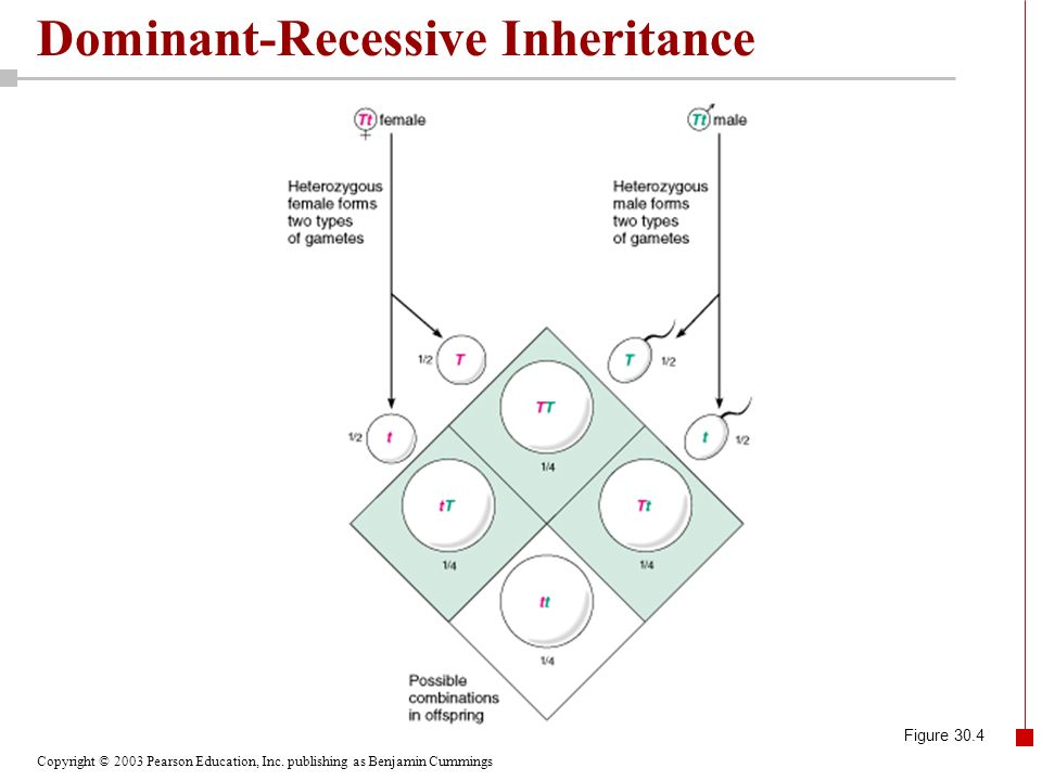 Dominant Recessive Chapter 30 Heredity. -...