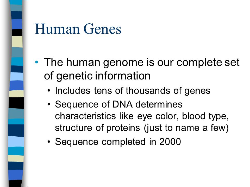 Human Genes The human genome is our complete set of genetic information. Includes tens of thousands of genes.