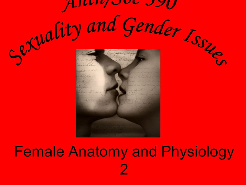 Female Anatomy and Physiology 2 - ppt video online download