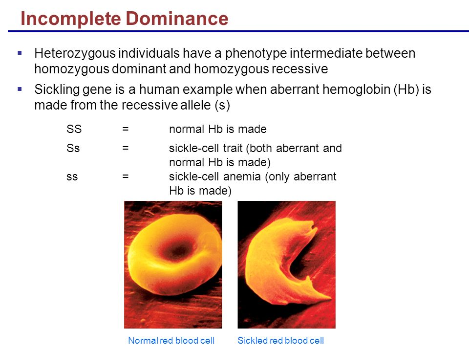 Lecture 8 Heredity. - ppt video online download