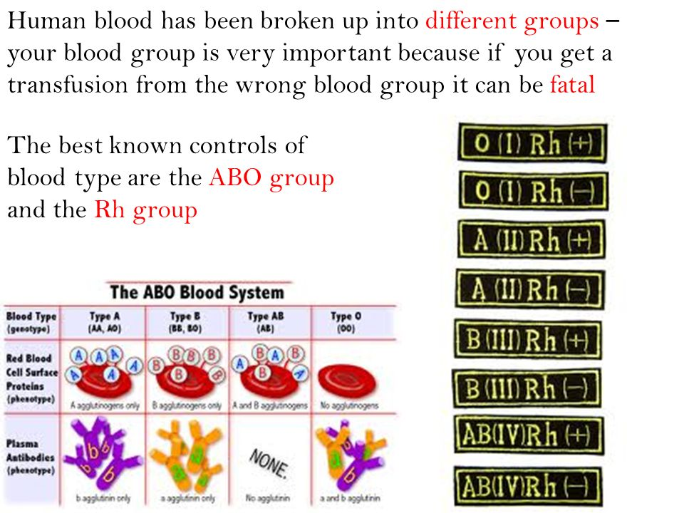 Human blood has been broken up into different groups – your blood group is very important because if you get a transfusion from the wrong blood group it can be fatal