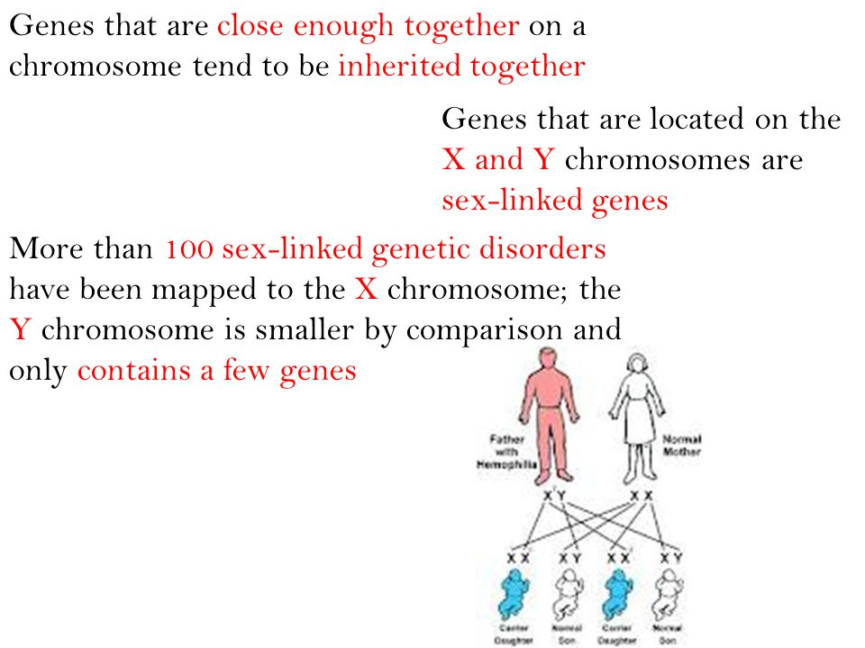 Genes that are close enough together on a chromosome tend to be inherited together