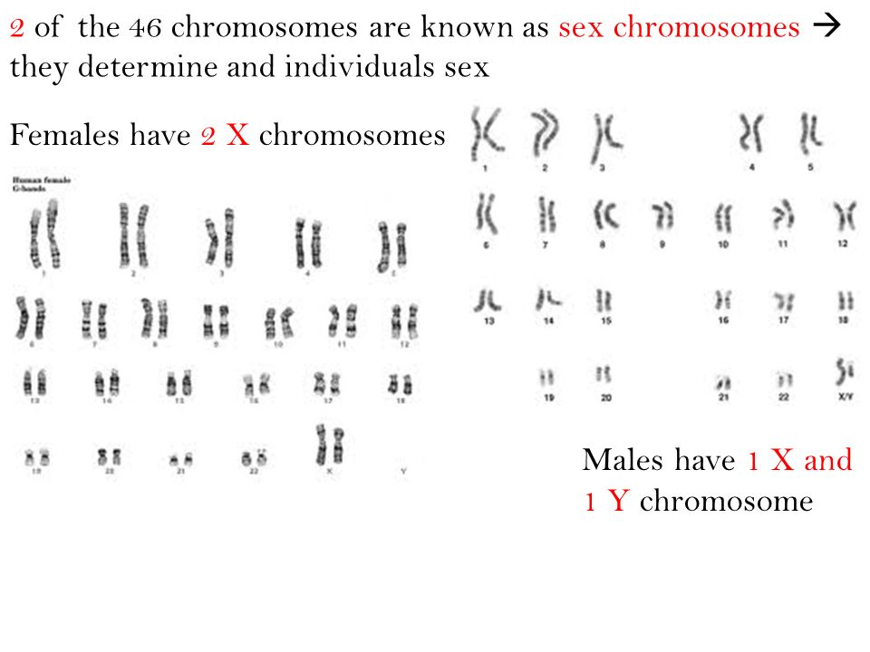 2 of the 46 chromosomes are known as sex chromosomes  they determine and individuals sex