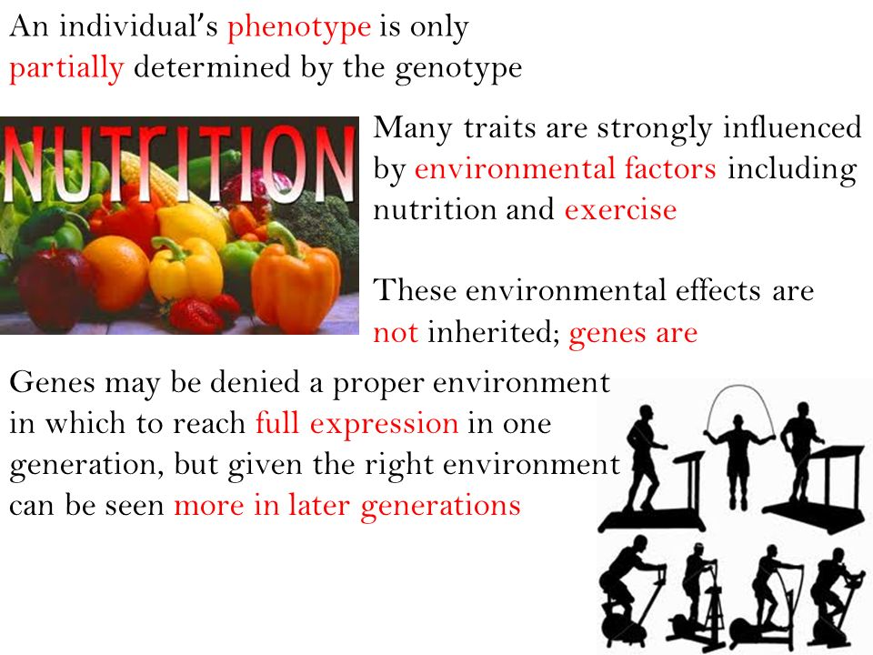 An individual's phenotype is only partially determined by the genotype