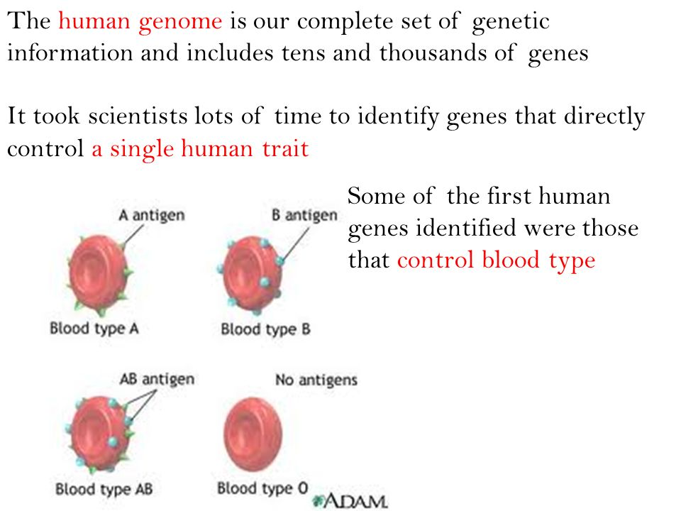 The human genome is our complete set of genetic information and includes tens and thousands of genes