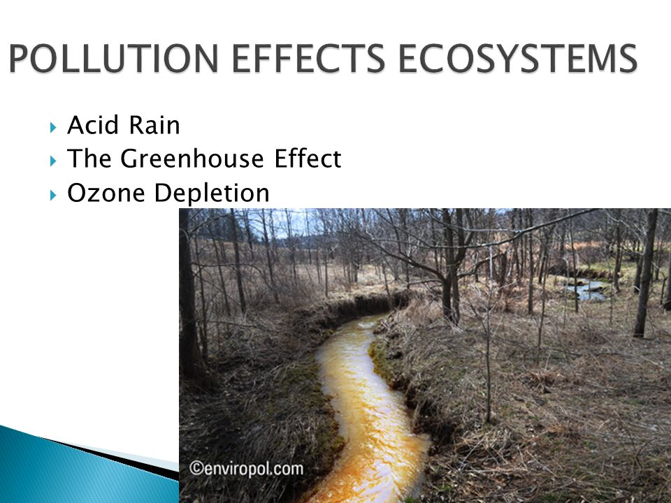 air pollution and acid rain essay Essay on acid rain essay contents: acid rain: compilation of essays on acid rain acid rain, air pollution, environment.