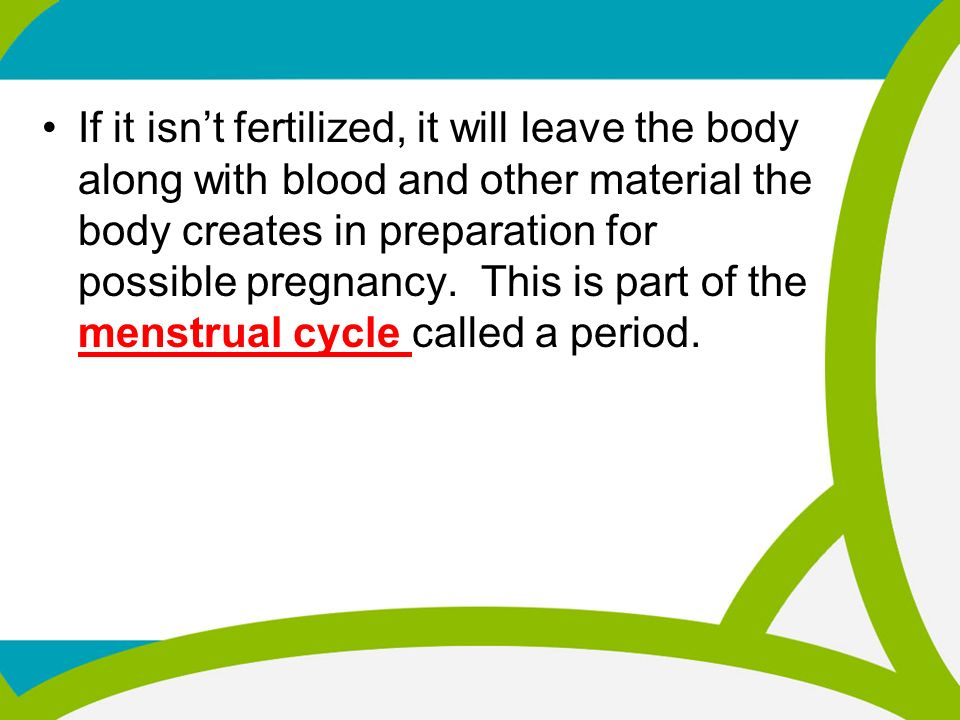MALE AND FEMALE REPRODUCTIVE SYSTEMS PUBERTY and ...