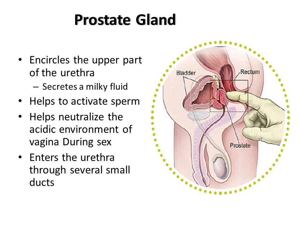 Activate Cowper\'s Gland: full version free software download ...