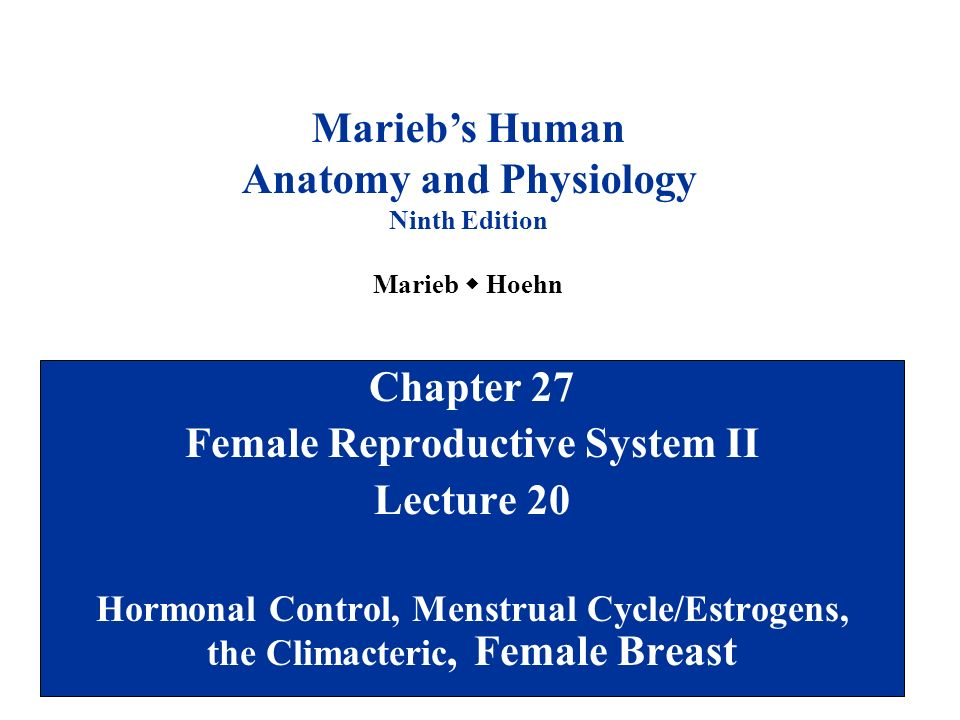 Anatomy and Physiology Female Reproductive System II - ppt video ...