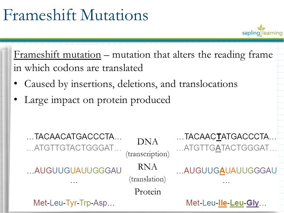 Ungewöhnlich Frameshift Mutation Fotos - Rahmen Ideen ...