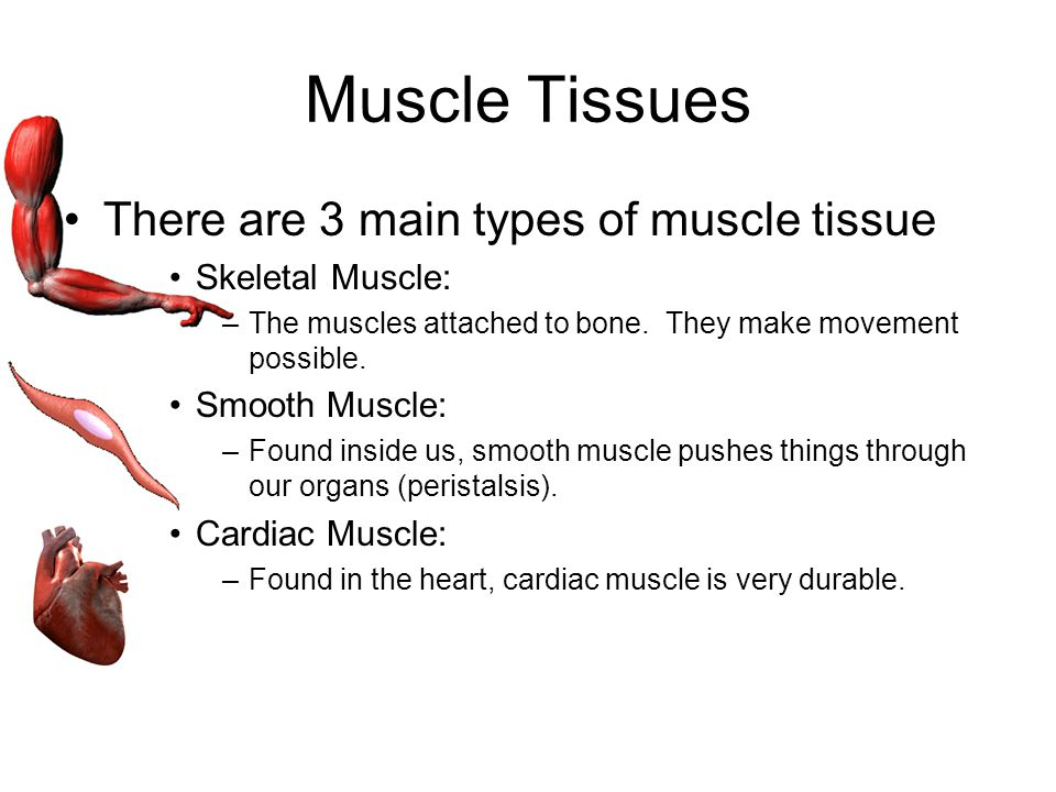 Muscle Tissues There are 3 main types of muscle tissue
