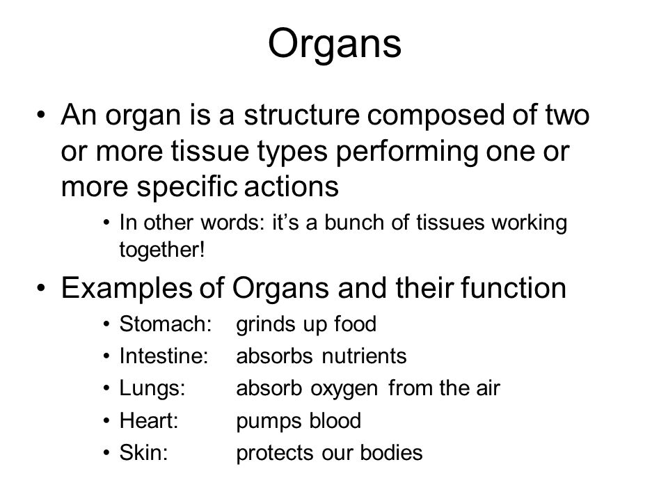 Organs An organ is a structure composed of two or more tissue types performing one or more specific actions.