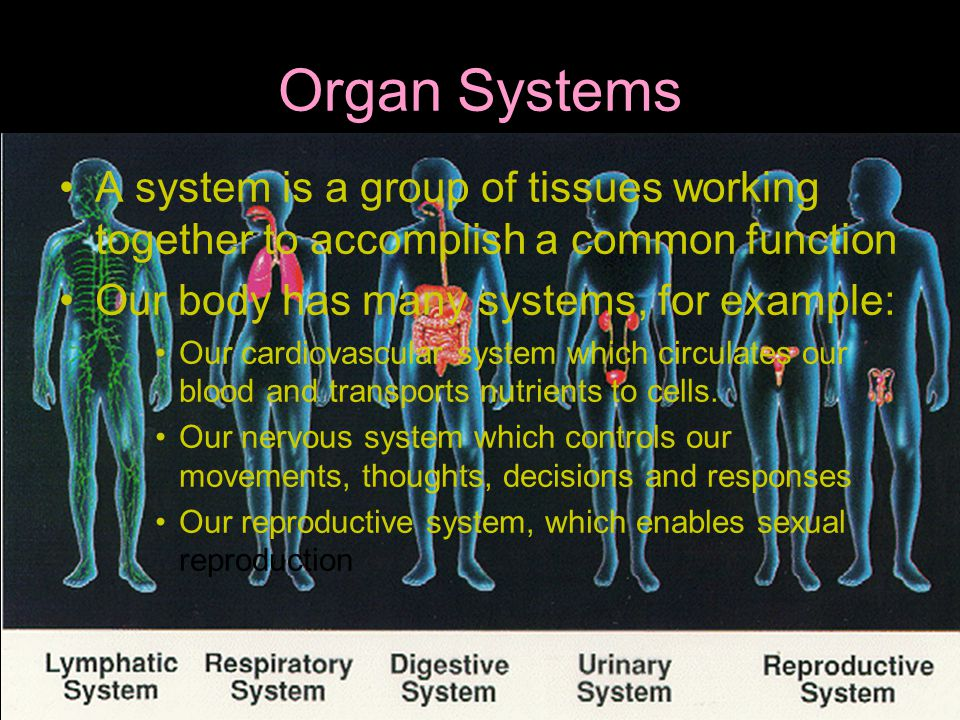 Organ Systems A system is a group of tissues working together to accomplish a common function. Our body has many systems, for example: