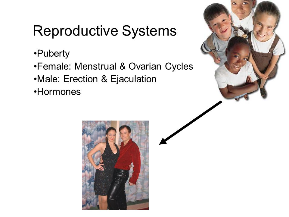 Reproductive Systems Puberty Female: Menstrual & Ovarian Cycles