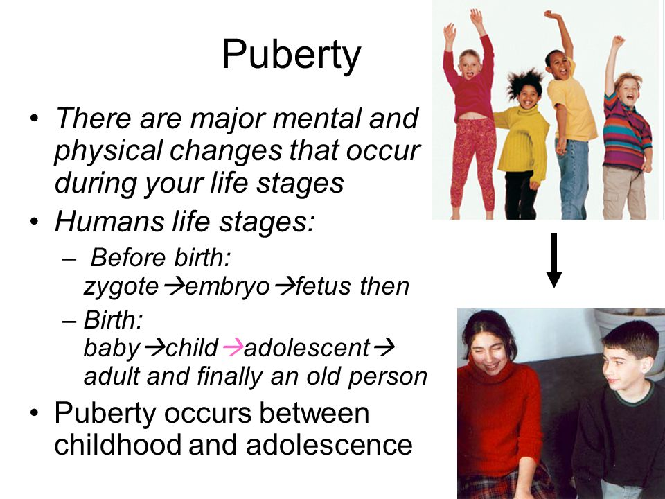 Puberty There are major mental and physical changes that occur during your life stages. Humans life stages: