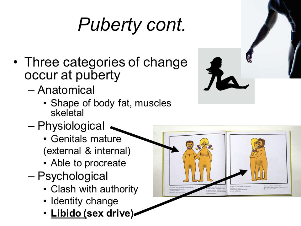 Puberty cont. Three categories of change occur at puberty Anatomical