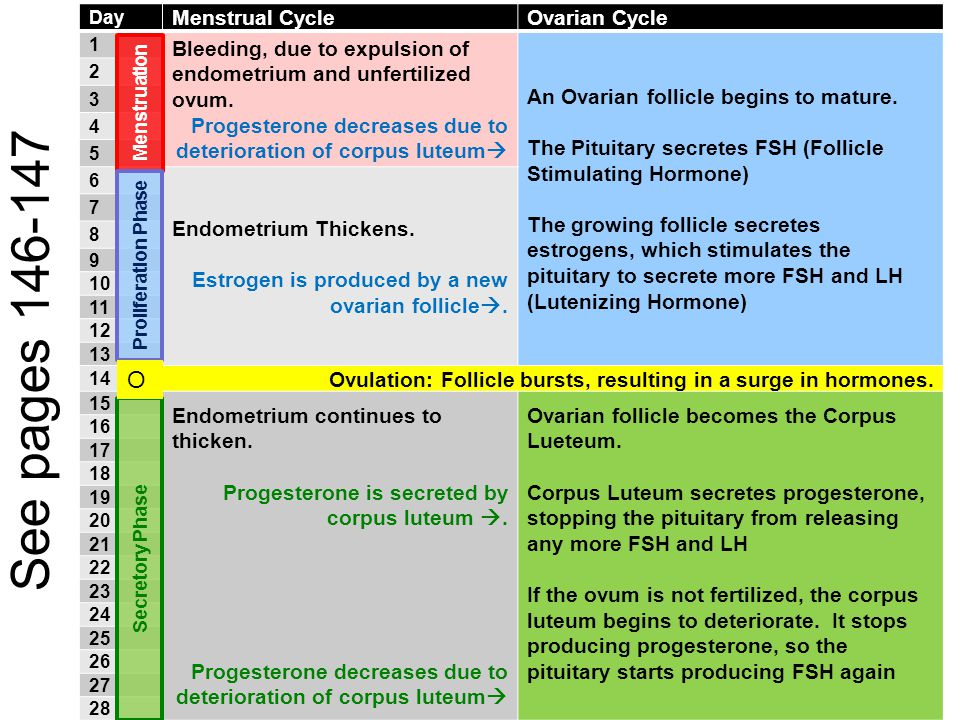 See pages 146-147 O Menstrual Cycle Ovarian Cycle