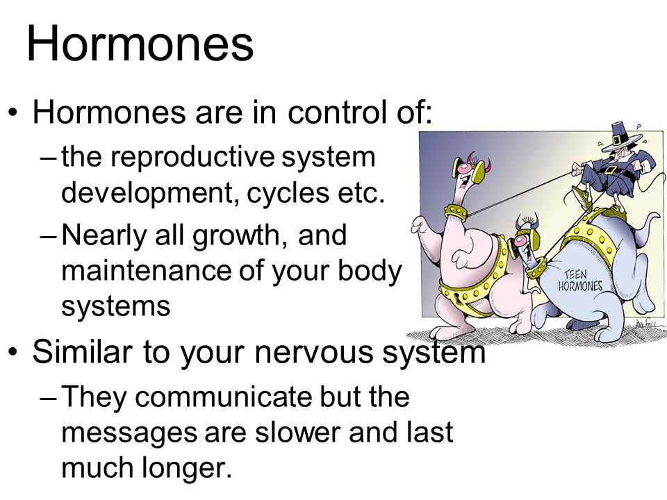 Hormones Hormones are in control of: Similar to your nervous system