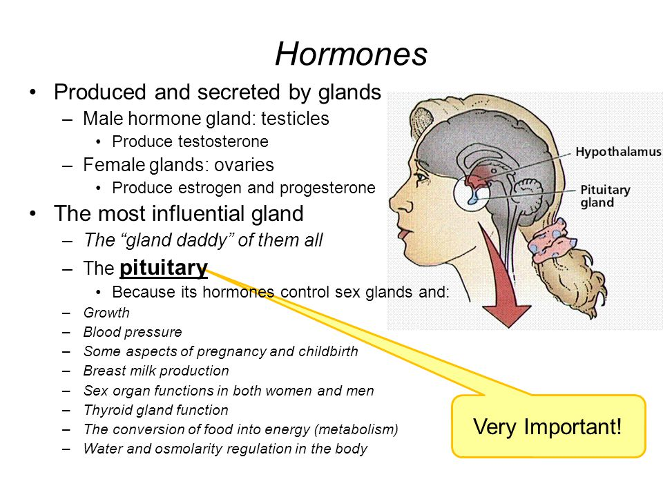 Hormones Produced and secreted by glands The most influential gland