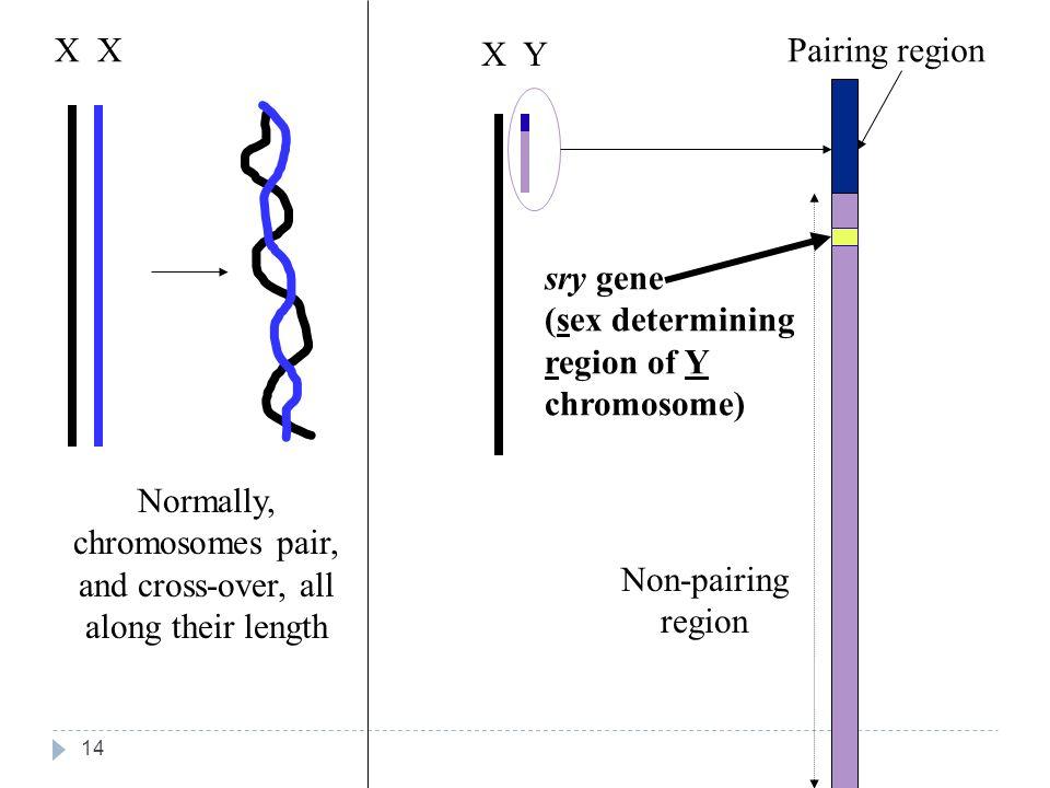 Chromosome determining region sex x