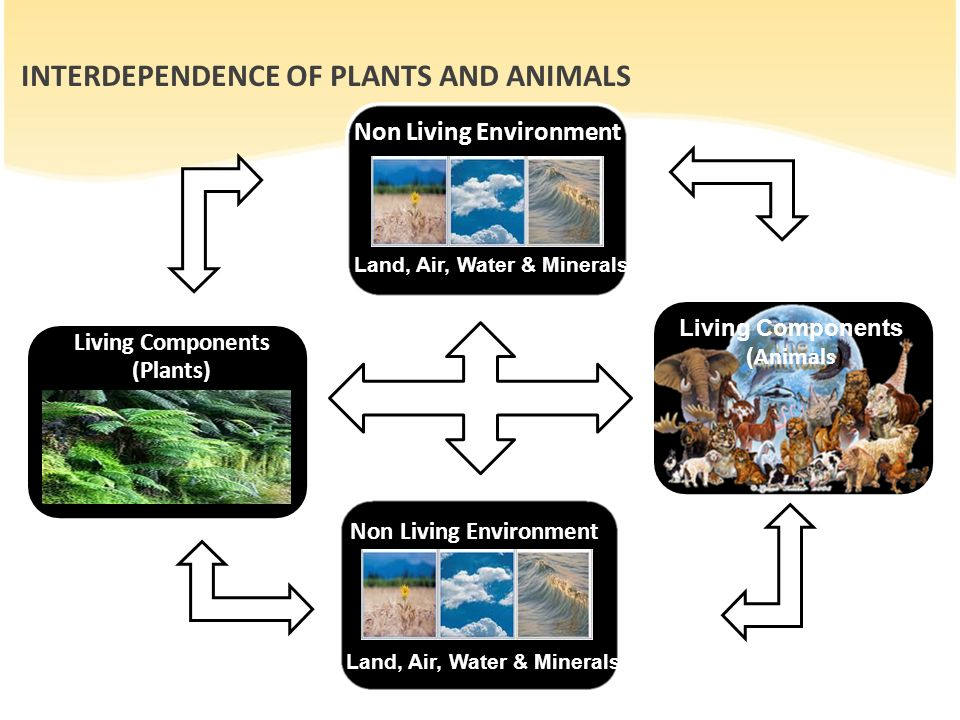 non living and living factors contributing to water pollution The causes of water pollution sewage and wastewater  read more marine dumping  read more industrial water pollution  read more nuclear waste and water pollution .
