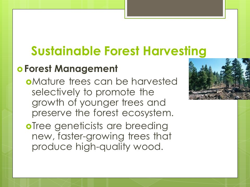 Sustainable Forest Management ~ Human impact on the environment ppt video online download