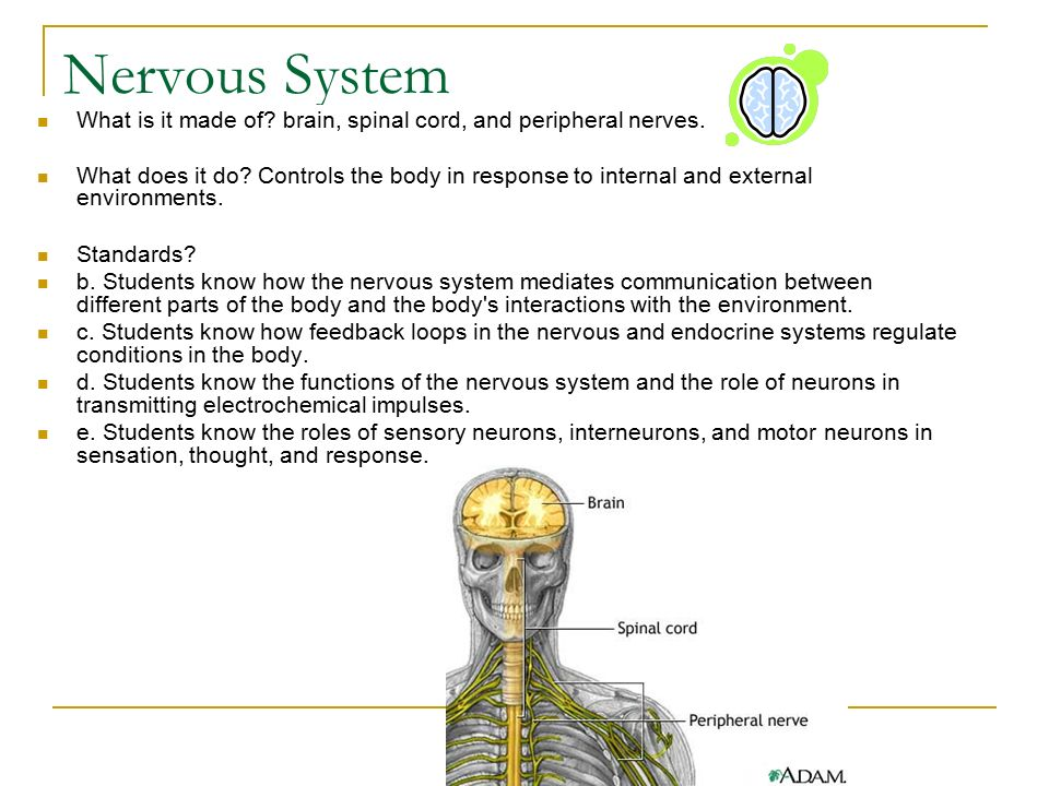 how does the brain communicate with How does the brain communicate with the rest of the body how is the autonomic branch of the peripheral nervous system involved in controlling emotions.