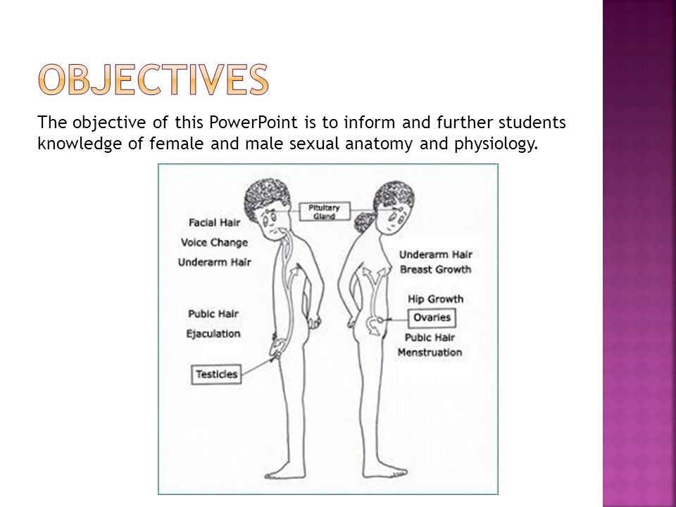 Male & female Sexual anatomy - ppt video online download