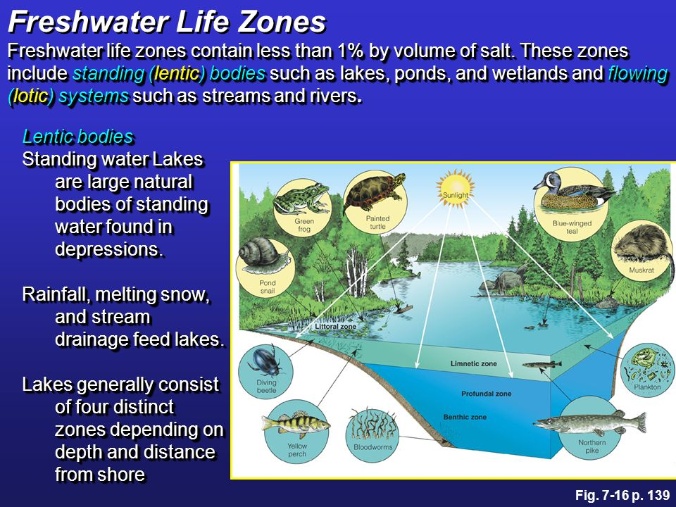 Natural Bodies Of Freshwater That Are Flowing
