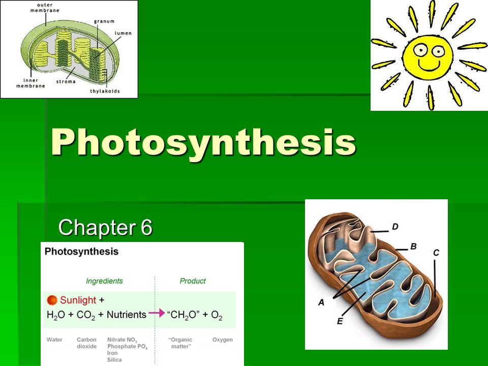 Chapter  Photosynthesis Using Light To Make Food Test