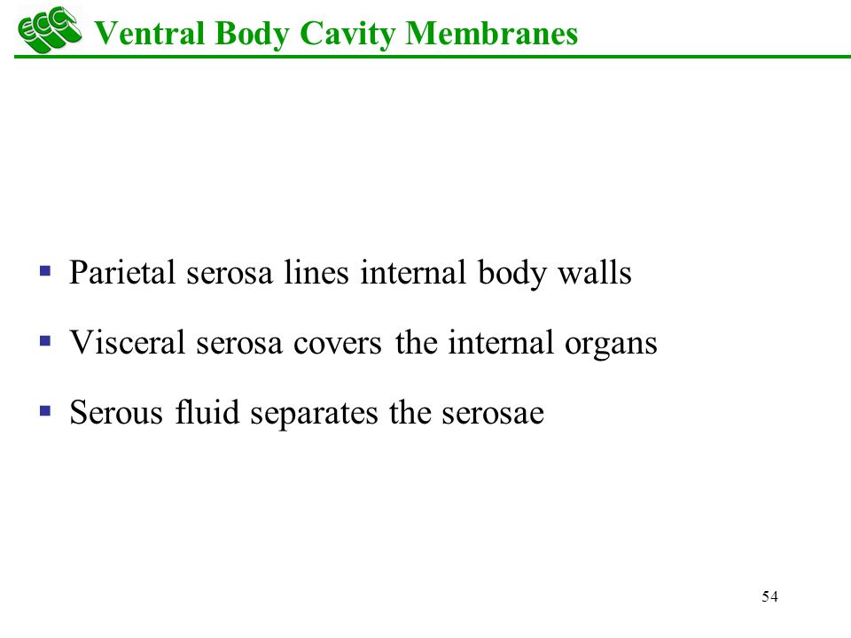 Mesh info together with Soft Palate moreover BIO122 Lab images likewise Chapter 4 Skin And Body Membranes further 218779. on nasal and ventral body cavities