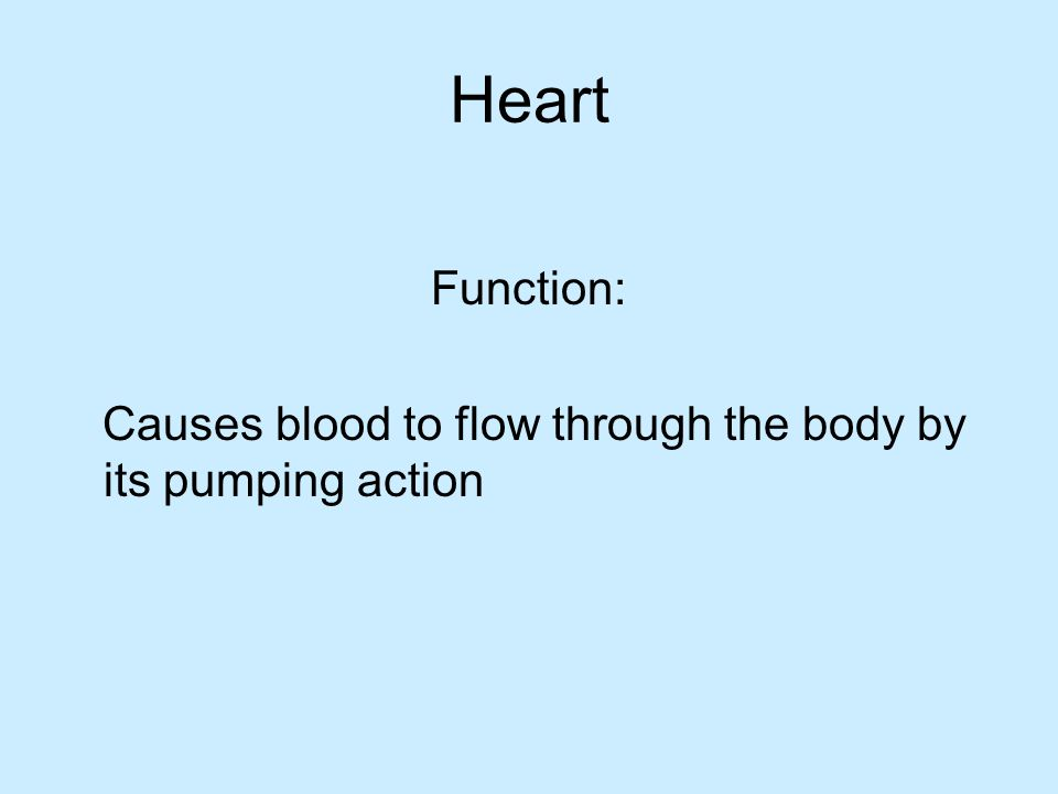 Heart Function: Causes blood to flow through the body by its pumping action